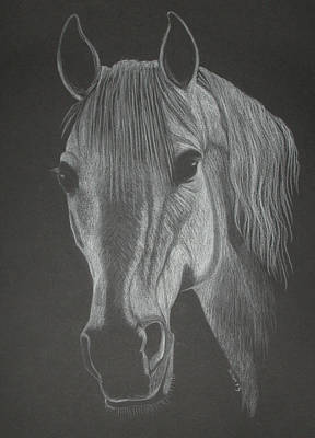 White Mare Art Print by Stephanie L Carr