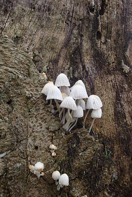 White Mini Mushrooms Art Print by Koral Garcia