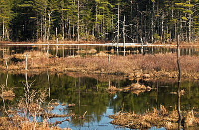 Photograph - White Mountain Marsh by Paul Mangold