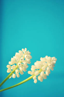 White Muscari Flowers Art Print by Photo by Ira Heuvelman-Dobrolyubova