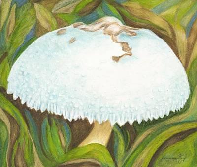 Painting - White Mushroom  by Jeanne Kay Juhos