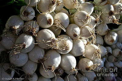 White Onions Art Print by Susan Herber