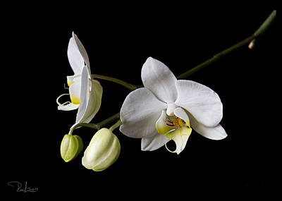 Photograph - White Orchid  Card by Raffaella Lunelli