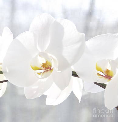 Photograph - White Orchid by Cindy Lee Longhini