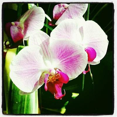 Orchids Photograph - #white #orchid #flower by Natalia D