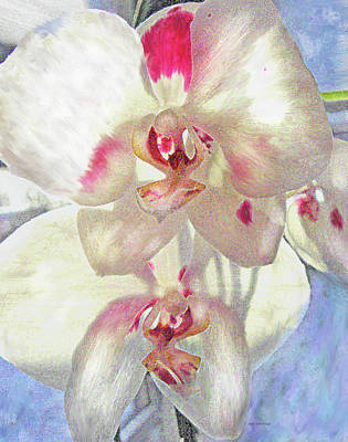 Digital Art - White Orchid by Jane Schnetlage