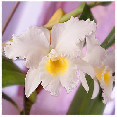 White Orchid Photograph - White Orchid by Mike McGlothlen