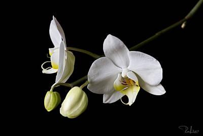 Photograph - White Orchid by Raffaella Lunelli