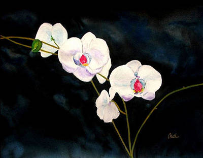 White Orchids Art Print by Alethea McKee