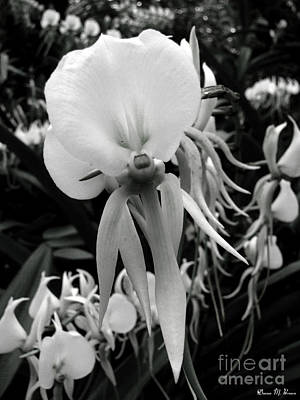 Photograph - White Orchids by Donna Brown