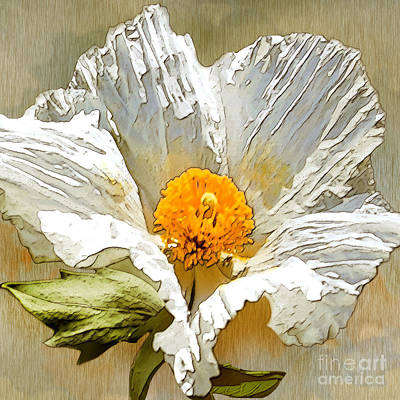 Drawing - White Paper Flower by Artist and Photographer Laura Wrede