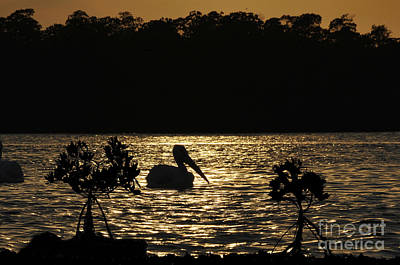 Art Print featuring the photograph White Pelican Evening by Dan Friend