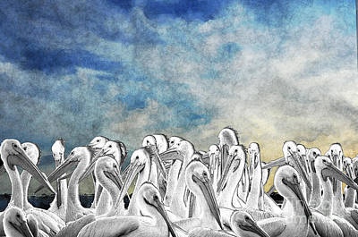 White Pelicans In Group Art Print