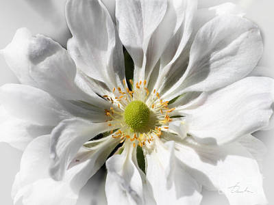 Photograph - White Petals by Danuta Bennett