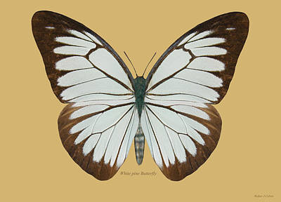 Digital Art - White Pine Butterfly by Walter Colvin