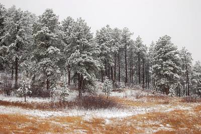 Photograph - White Pines by Dakota Light Photography By Dakota
