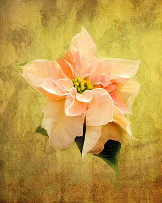 Painting - White Poinsettia by Jai Johnson