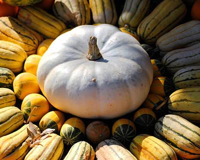 Photograph - White Pumpkin by Jai Johnson