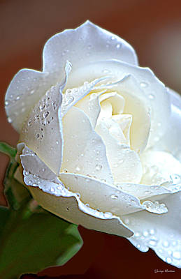 Art Print featuring the photograph White Rose 005 by George Bostian