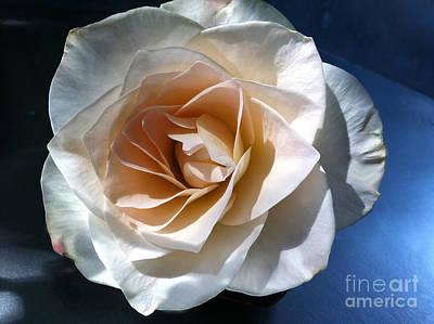 White Rose Art Print by Addie Hocynec