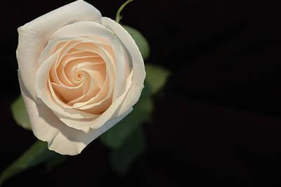 Photograph - White Rose Blank by Rafael Figueroa