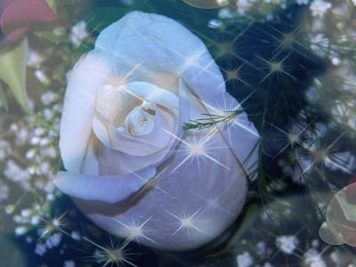 Art Print featuring the photograph White Rose by Michelle Frizzell-Thompson