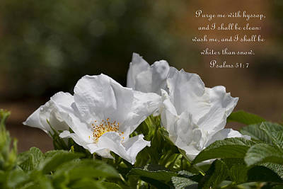 Faith Hope And Love Photograph - White Roses - Purge Me With Hyssop by Kathy Clark
