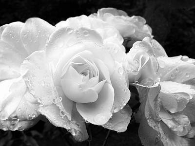 Photograph - White Roses Black And White by Jennie Marie Schell