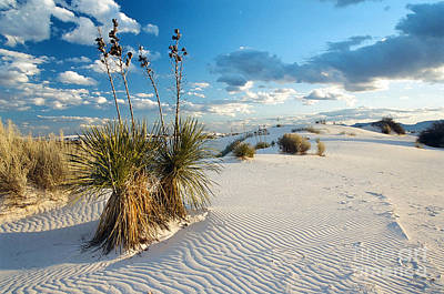 Photograph - White Sands by Frank Townsley