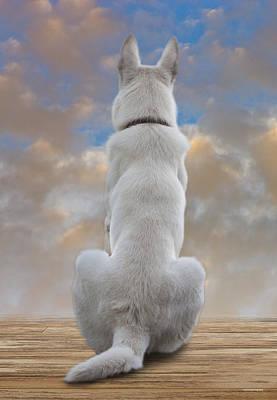 White German Shepherd Dog Photograph - White Sentinel by Ron Jones