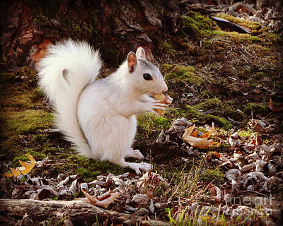 Photograph - White Squirrel With Peanut by Crystal Joy Photography