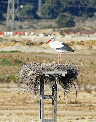 Photograph - White Stork by Rod Jones