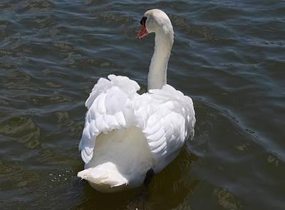White Swan Art Print by Carrie Munoz