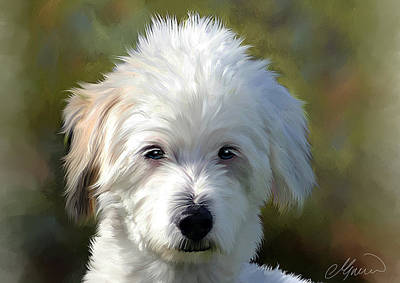 White Terrier Dog Portrait Art Print by Michael Greenaway
