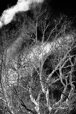 Photograph - White Tree Wave by John Rizzuto