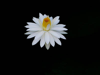 Photograph - White Water Lily by Chua  ChinLeng
