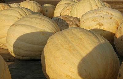 Keith Richards - White Yellow Pumpkins by LeeAnn McLaneGoetz McLaneGoetzStudioLLCcom