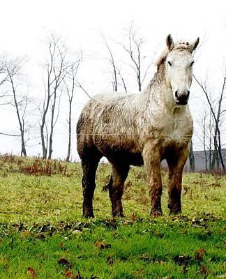 Whitehorse Original by Doug Hubbard