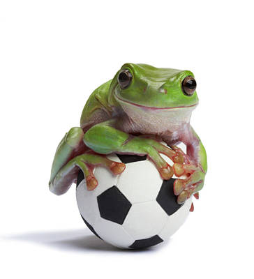 Whites Tree Frog On Small Football Art Print by American Images Inc