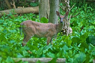 Whitetail Photograph - Whitetail 7335 by Michael Peychich