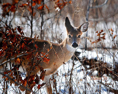 Whitetail Deer In Snow Art Print