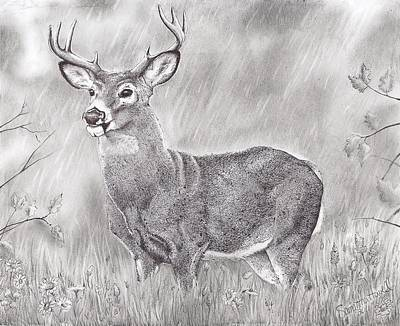 Rain Forest Animals Drawing - Whitetail Deer by Samantha Howell