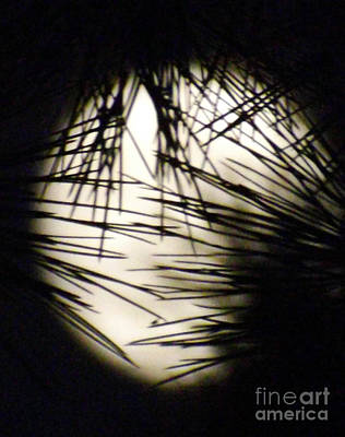 Photograph - Wicked Moon by Gary Brandes