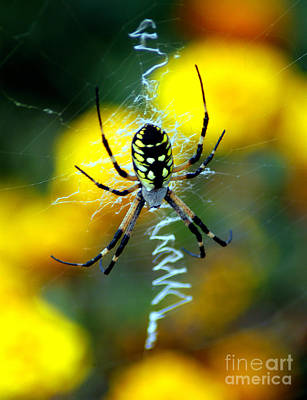 Photograph - Wicked Spider Paint by Clayton Bruster
