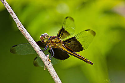 Dragonfly Photograph - Widow In Waiting by Barry Jones