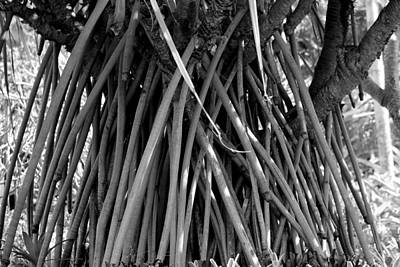 Photograph - Wierd Tree by Elizabeth  Doran