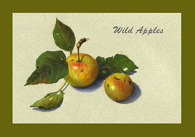 Wild Orchards Drawing - Wild Apples And Leaves by Joyce Geleynse