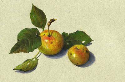 Drawing - Wild Apples In Color Pencil by Joyce Geleynse