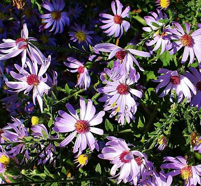 Wild Asters Art Print by Bruce Bley