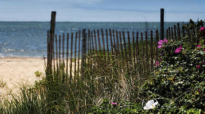 Photograph - Wild Beach Rose - Cape Cod by Expressive Landscapes Fine Art Photography by Thom